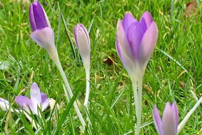 Frühling ausmisten