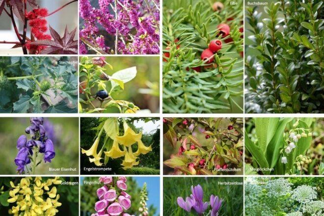 Giftige Pflanzen für Kinder im Garten