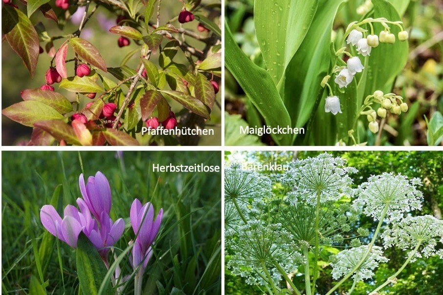 Giftige Pflanzen im Familiengarten