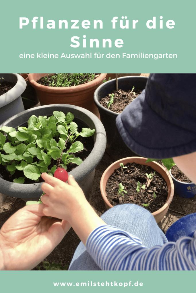 Pflanzen im Familiengarten