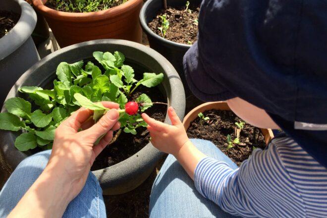 Gemüsegarten im Topf