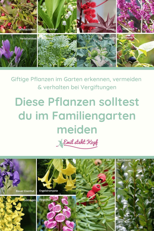 Achtung giftige Pflanzen!